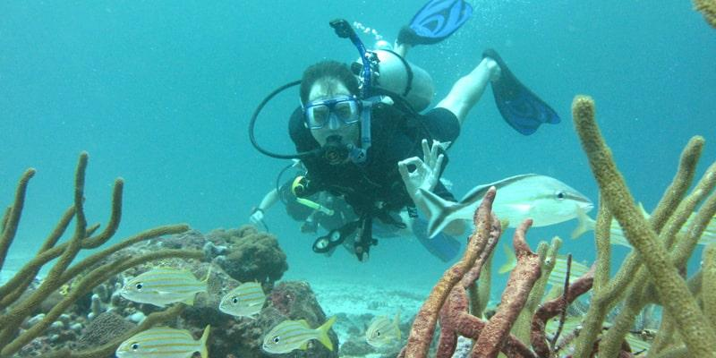 Visit Tobago Beyond Diving Black Rock Divers